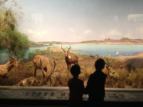 Upper Nile Region, Akeley Hall of African Mammals, AMNH