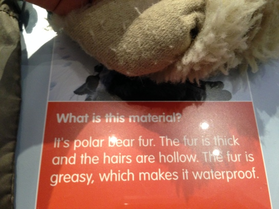 'Polar bear fur' in the arctic exhibition at Sheffield Museum
